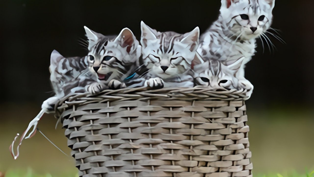 The Temperament And The Personality Of The Silver Bengal Cat Cats Venture