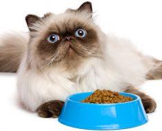 persian cat food
