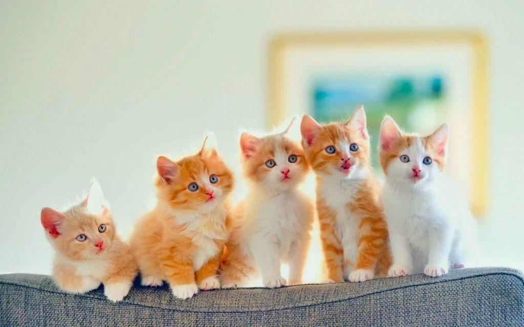 famous cat names